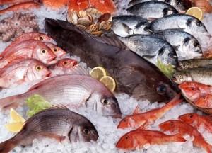 peixes mais proteicos